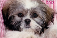 My love for Shih-Tzus / by Deb murray