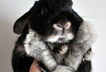 black bunnys