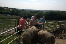 Farmer for a Day: Smallholders Experience Weekends / Farmer for a day holidays can be great for families with teenagers interested in becoming a vet or families looking to move to a smallholding and start keeping animals. Hands on interaction with sheep, pigs, goats, cattle and chickens