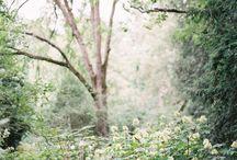 Moodboard - English garden