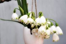 Eastern decoration / Flower decoration which makes the eatern spring time even more beuatigful