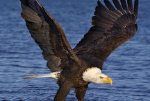 Free like an eagle!!!!!!