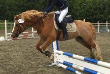 Selbu hestesportsklubb