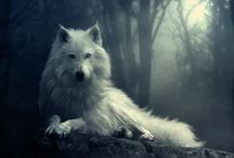 Game of trones-wolf