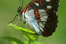 Buterflies / by Mayra Elisa Portillo