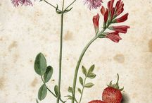 Antique Botanical & Zoological / by NaiveNeedle_ Hand embroidery patterns