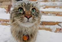 Pets in the snow! / Make sure you're keeping your fuzzy friend warm! / by CozyWinters.com