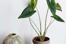 PLANTS WISHLIST