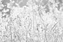 talvi luonto