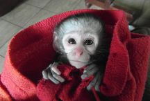 The Vervet Monkey Foundation Volunteer Experience / Some of the sights and amazing experiences available to volunteers at this truly special venue and organisation!