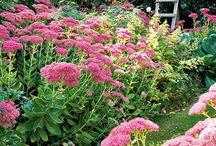 plantes vivaces et arbustes