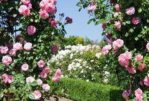 Сад, огород.