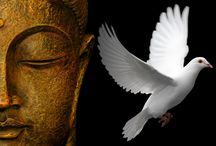Now and Zen / by Cindy Clays