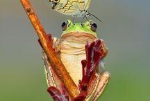 Photo: Amazing Nature {Creatures} / by Elfenkrokus