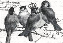 Transfer - Ptaki