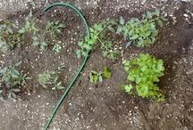 Our Vegetable Garden- The Origin / www.eatcookandlove.com