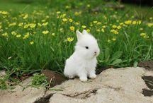 Bridgett Bunny