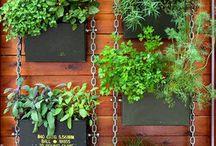 Висящие кухонные травы