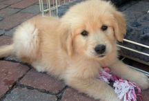 super cute. / Puppies and adorable animals.