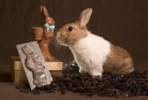 """Make Mine Chocolate / Each year, unwanted, former Easter rabbits fill local rabbit rescues and humane societies. The goal of the """"Make Mine Chocolate!"""" campaign is to break the cycle of acquisition and relinquishment by educating the public about the responsibilities involved in keeping a companion rabbit before a rabbit is brought home."""