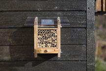 Bienen / Wildbiene / Bee
