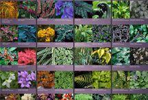 Κήποι με φυτα στον ισκιο