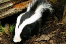 I hate skunks