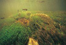 Aquatic/riparian biotopes