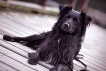 Dog / Dog pics