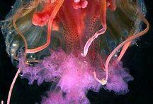 aquarismo marinho