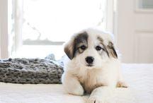 Hunde / Sind sie nicht süß :)
