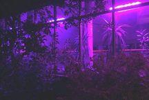 Aesthetic: purple