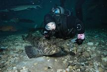 Oregon Coast Aquarium In The News