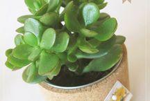 idées deco : succulentes