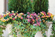 Κηπουρική σε γλάστρες