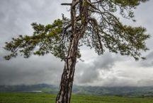 ağaç halleri
