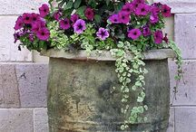 Outdoors - Floral containers / container gardens.