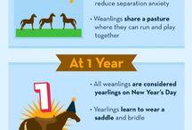 Animals & Pets Infographics