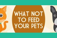 Love Your Pets & Furry Friends