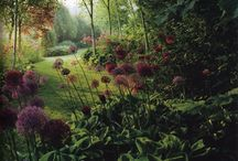 Patio and Garden / by Anna Dunn