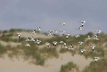 Stemvoornatuur.nl / Laat jouw stem horen! De natuur maakt ons leven rijker. Stem op www.stemvoornatuur.nl en laat Europa zo weten dat de natuur goed beschermd moet blijven.