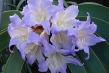 Flower_Blue, Purple&White