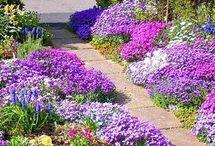 цветение на всё лето
