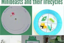 Insects & Minibeasts