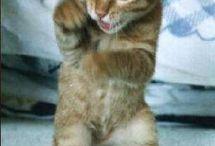 Cute cat / 可愛い猫達