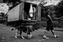 Fotos Premiadas   Fearless Photographers