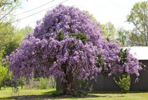 The Color Purple / Just because I love the color purple. Biblically it represents royalty.