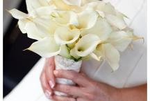 Candace wedding