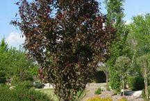 Trees, shrubs and perennials