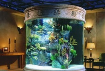 Aquariums Saltwater Fish Tanks / AWESOME SALTWATER FISH TANKS FOR HOMES. Fish tanks bring calmness and enjoyment watching the fish swim. It gives the mind a chance to rejuvenate and relax. Take the time to enjoy.... Very good to add to your meditation if you are into that too.  You can also turn out all of the lights and just have the fish tank lights on, what an effect!!! Remember it's all about the fish's. ❤ / by Joseph Gallant